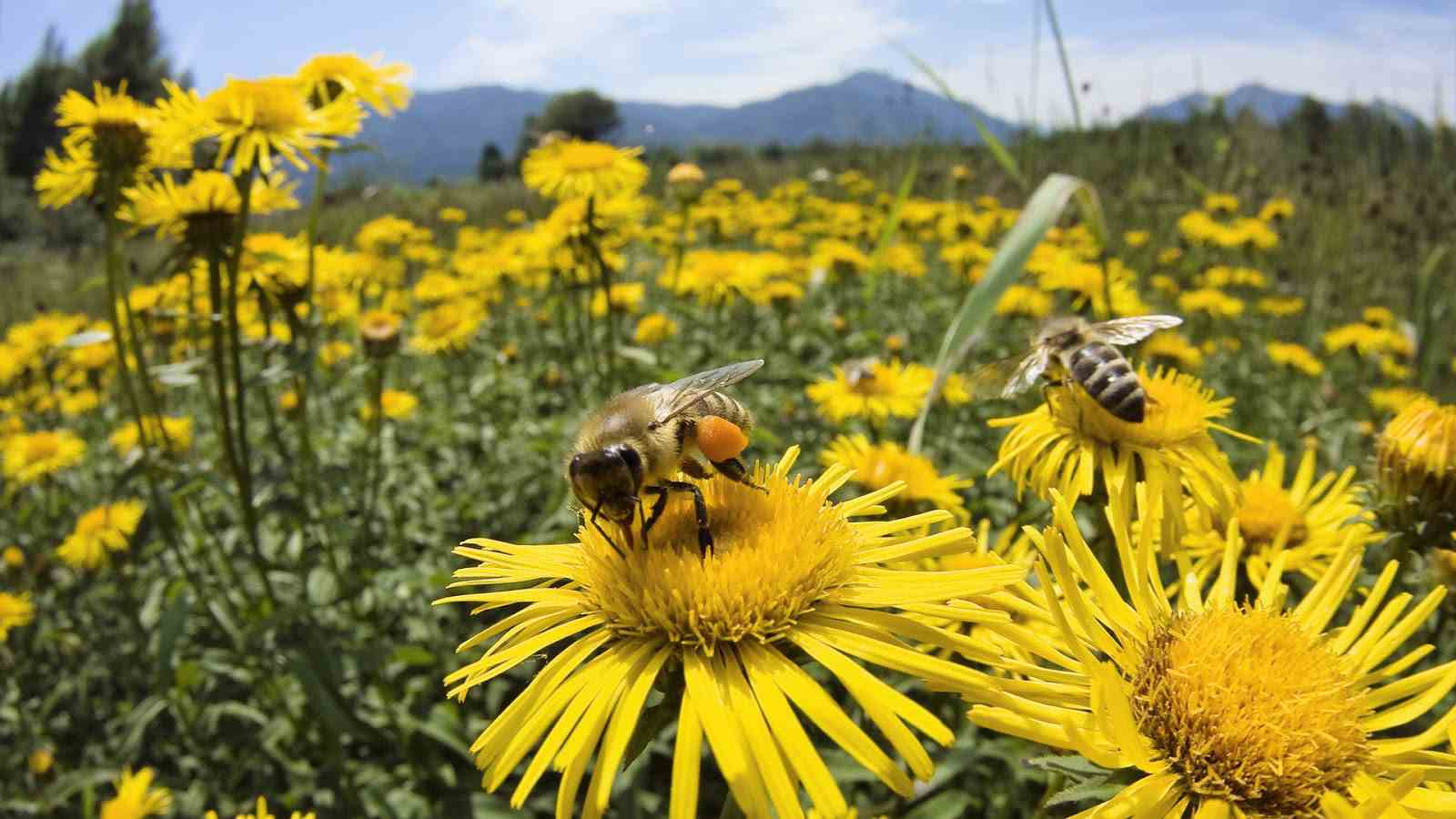 arı ile ilgili görsel sonucu