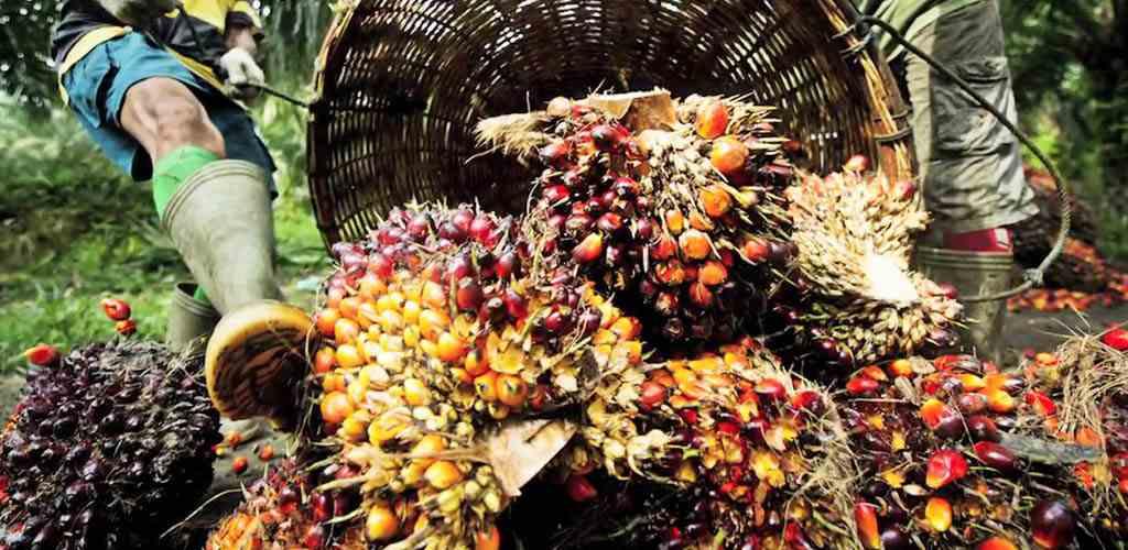 palm-bitkisi-palm-yagi